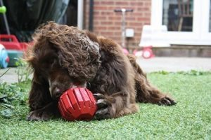 The Kong Stuff-a-Ball can be stuffed with smearable treats.