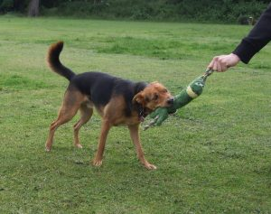 Acceptable Play with your Dog