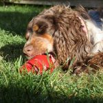 Mental stimulation is essential if you want your dog not to chew